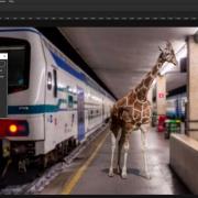 preview-giraff